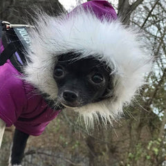 Puppy Chihuahua or Small Dog Designer Purple Parka Style Dog Coat Chihuahua Clothes and Accessories at My Chi and Me
