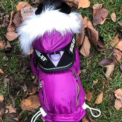 Puppy Chihuahua or Small Dog Designer Purple Parka Style Dog Coat