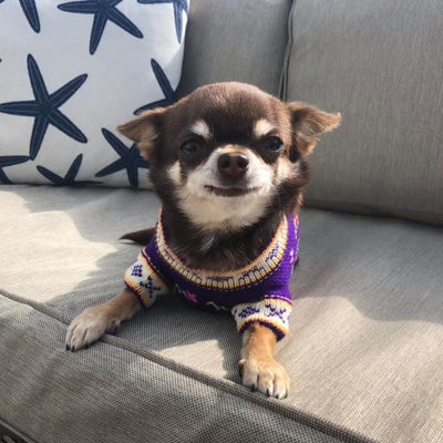 Size 4 Hand Embroidered Peruvian Dog Jumper Purple Brights Yellow 26cm Chihuahua Clothes and Accessories at My Chi and Me