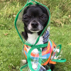 Green Edged Waterproof Raincoat for Chihuahuas and Small Dogs - 3 SIZES Chihuahua Clothes and Accessories at My Chi and Me