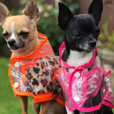 Orange Edged Waterproof Raincoat for Chihuahuas and Small Dogs - 3 SIZES Chihuahua Clothes and Accessories at My Chi and Me
