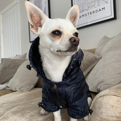 Urban Pup Chihuahua Puppy Chihuahua or Small Dog Navy Blue Coat Rainstorm Jacket Chihuahua Clothes and Accessories at My Chi and Me