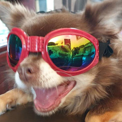 Doggles Dog Goggles for Larger Chihuahuas and Small Dogs 6 COLOURS Chihuahua Clothes and Accessories at My Chi and Me
