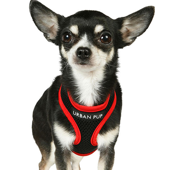 Active Mesh Black and Red Harness by Urban Pup Chihuahua Clothes and Accessories at My Chi and Me