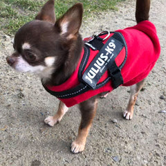 Chihuahua or Small Dog Fleece Jumper with D Rings For Leash Red Chihuahua Clothes and Accessories at My Chi and Me