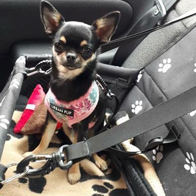 Premium Portable Folding Travel Car Seat Black with White Paws - My Chi and Me