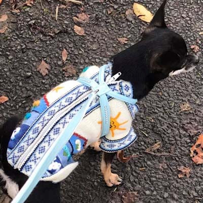 Size 4 Hand Embroidered Peruvian Dog Jumper Mid Blue and White 30cm Chihuahua Clothes and Accessories at My Chi and Me