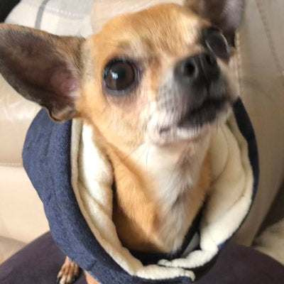 Super Soft Padded Chihuahua or Small Dog Coat Medium