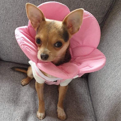 Post Surgery Soft Protective Flower Collar Pink - My Chi and Me