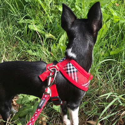 Red and Black Tartan Harness by Urban Pup