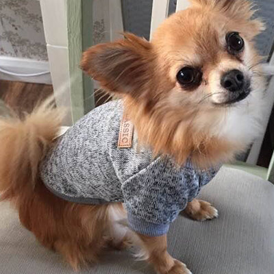 Chihuahua Puppy and Small Dog Knitted Cosy Fleece Lined Jumper 6 COLOURS Small Chihuahua Clothes and Accessories at My Chi and Me