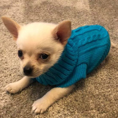 Soft Turquoise Cable Knit Chihuahua Puppy Jumper Chihuahua Clothes and Accessories at My Chi and Me