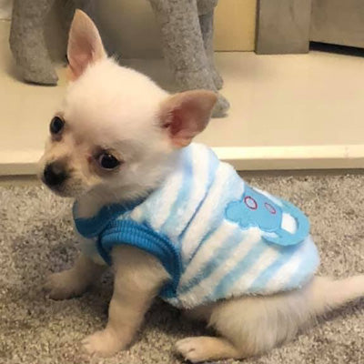 Chihuahua Puppy Fluffy Striped Blue and White Vest with Rocking Horse 4 SIZES Chihuahua Clothes and Accessories at My Chi and Me