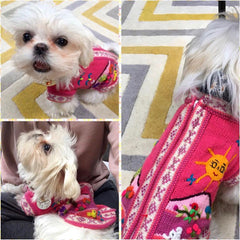 tinkerbellrose wears rhubarb pink hand embroidered peruvian wool dog jumper