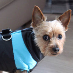 Gilet style chihuahua dog coat black and blue water resistant with D rings