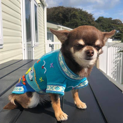 Size 4 Hand Embroidered Peruvian Dog Jumper Turquoise Brights 26cm Chihuahua Clothes and Accessories at My Chi and Me