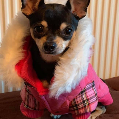 Urban Pup Chihuahua Puppy Chihuahua or Small Dog Hot Pink Highland Lady Tartan Coat