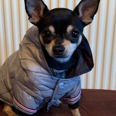 Lightweight Sporty Padded Unisex Chihuahua Puppy or Small Dog Hooded Coat Silver Grey Chihuahua Clothes and Accessories at My Chi and Me