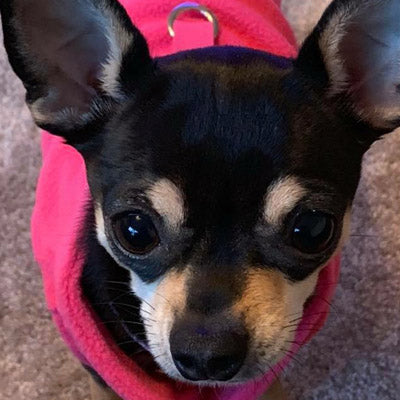 Chihuahua or Small Dog Fleece Jumper with D Rings For Leash Pink Chihuahua Clothes and Accessories at My Chi and Me