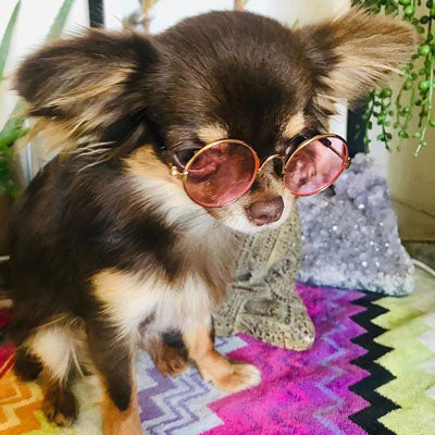 Medium Sunglasses for Chihuahuas and Small Dogs Pink Chihuahua Clothes and Accessories at My Chi and Me