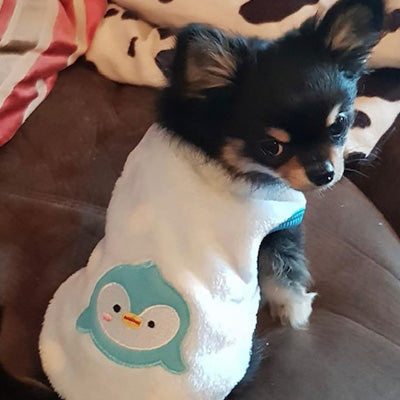 Chihuahua Puppy Fluffy Blue and White Spot Vest with Penguin Motif Chihuahua Clothes and Accessories at My Chi and Me