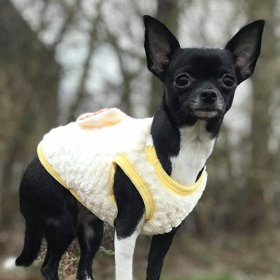 Chihuahua Puppy Fluffy Jumper Daisy Chain and Diamante Cherry Bow Lemon - My Chi and Me