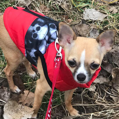 Water Resistant Padded Red Chihuahua Dog Gilet Skulls Chihuahua Clothes and Accessories at My Chi and Me