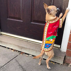 Size 2 Hand Embroidered Peruvian Dog Jumper Red Yellow Blue and Green 24cm