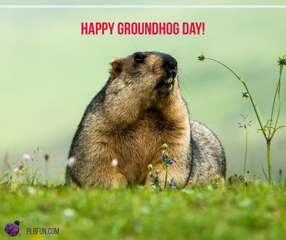 "FREE Printables: Activity Sheets ""❄️🌷 Happy Groundhog Day! ❄️🌷 """