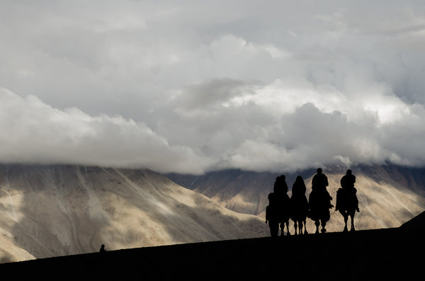 Tourists ride the Bactrian camel (double humped camels) in Hunder, Nubra valley.