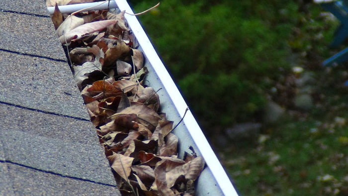 When should you clean out your gutters?  And how often?