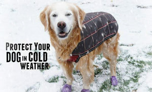 Do Dogs Need Clothes in the Winter?
