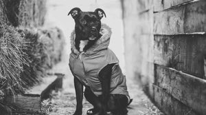dog-jackets-dog-e-styles