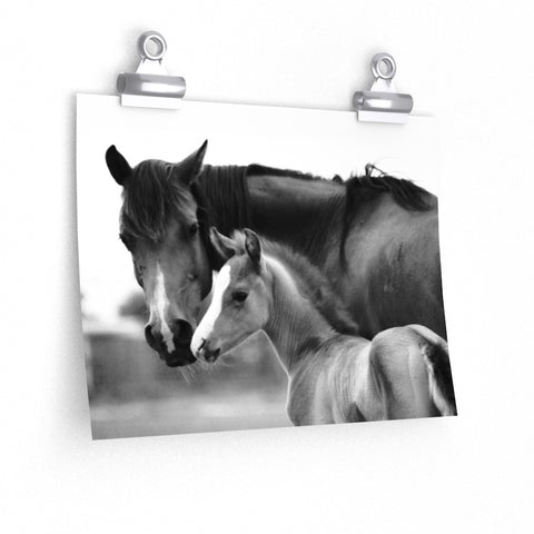 Mare and Foal Black and White Photo Premium Matte horizontal poster - Jim N Em Designs