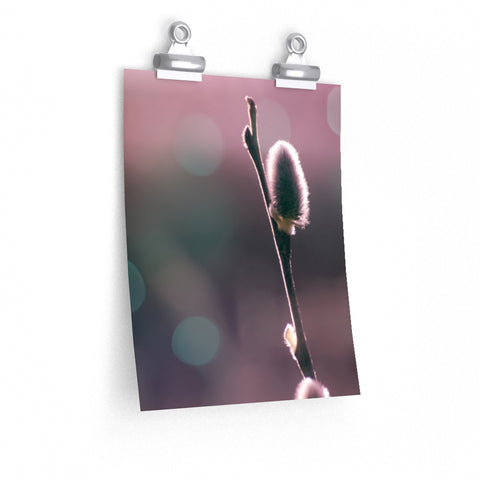 Pussy Willow Tree Bloom Blossom Flower Abstract Art Premium Matte vertical poster - Jim N Em Designs