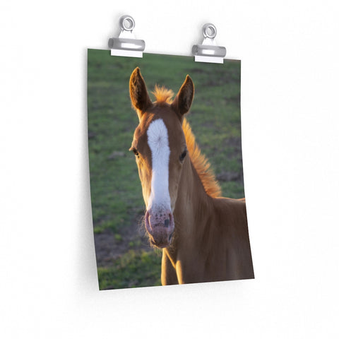 Foal Portrait Chestnut Sunlight Horse Art Photo Premium Matte vertical poster - Jim N Em Designs