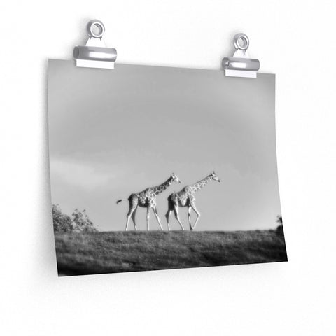 Giraffes on the March Africa Photo Premium Matte horizontal poster - Jim N Em Designs