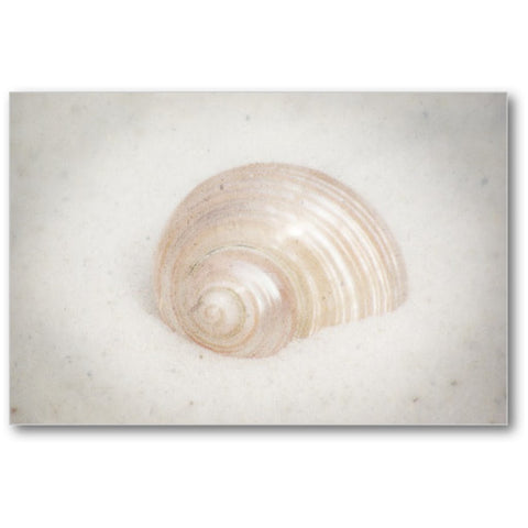 Beach Shell Ocean Gallery Mini Canvas Print - Jim N Em Designs