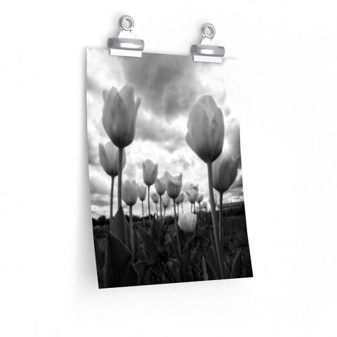 Tulip Field with Storm Clouds in Black and White Premium Matte vertical poster - Jim N Em Designs