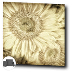 Rustic Sepia Sunflowers Gallery Canvas Mini Print - Jim N Em Designs
