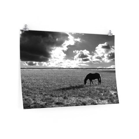 Horse Field Pasture Dramatic Clouds Black and White