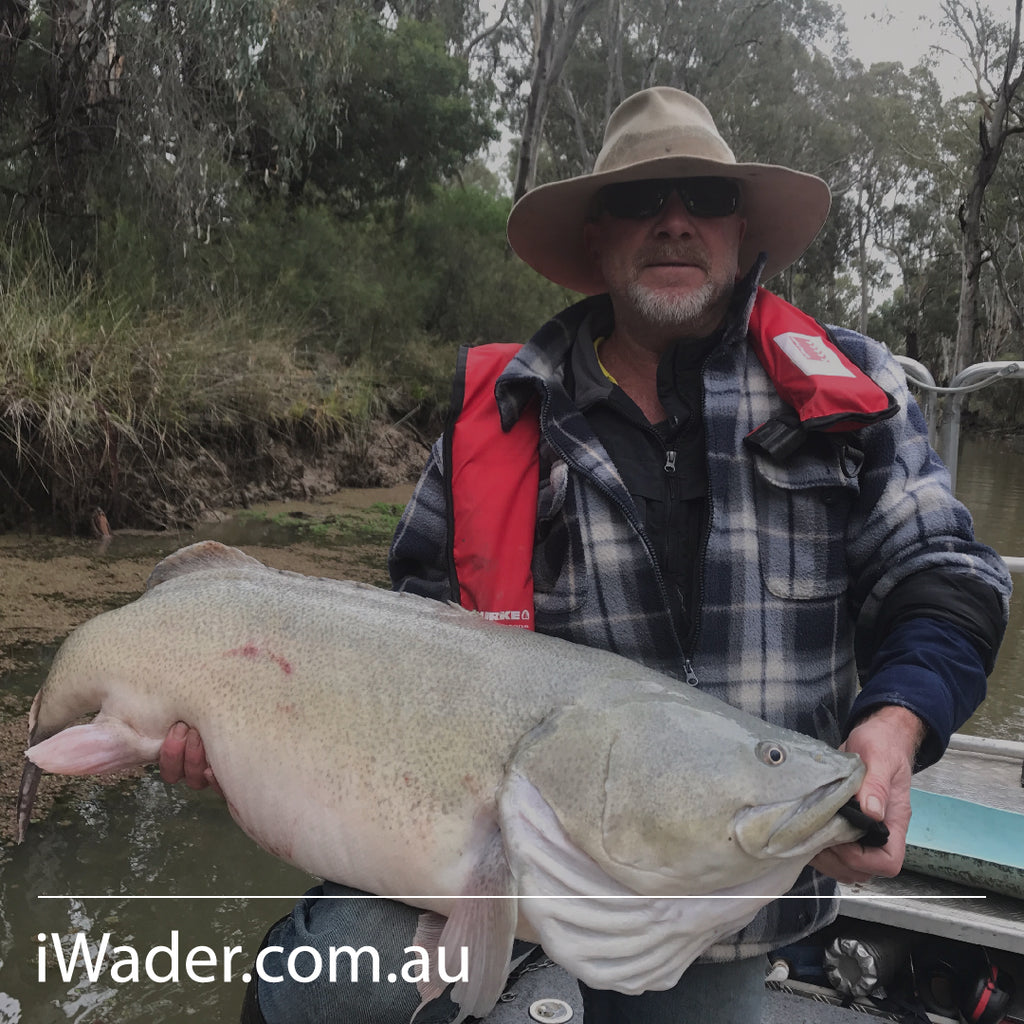 "Murray Cod ""Ponde"" The River Creator"