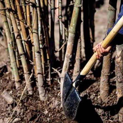 Bamboo Forest Planting with Arief Rabik and Jed Long Sunday 6 May 8:30 - 10:30