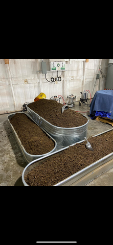 Pasteurized mushroom growing substrate