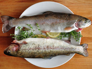 Raw Trout - South Australia
