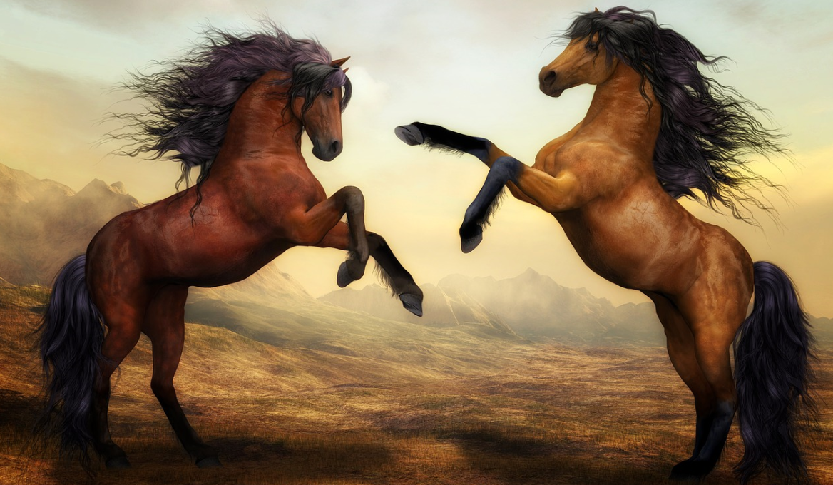 30+ Things You Didn't Know About Horses