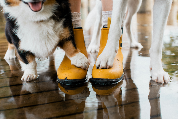 Dogs and yellow gumboots