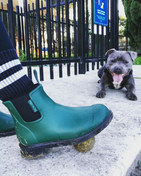 dog waiting to play with a ball, the ball is trapped under his a merry people alpine green boot