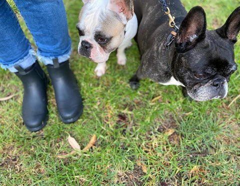 women in merry people black boots with two french bulldogs, in the park