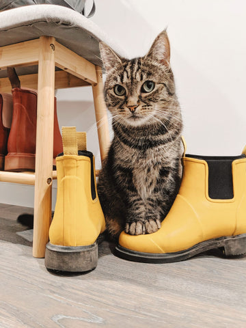 Pebbles the Cat and her Merry People boots